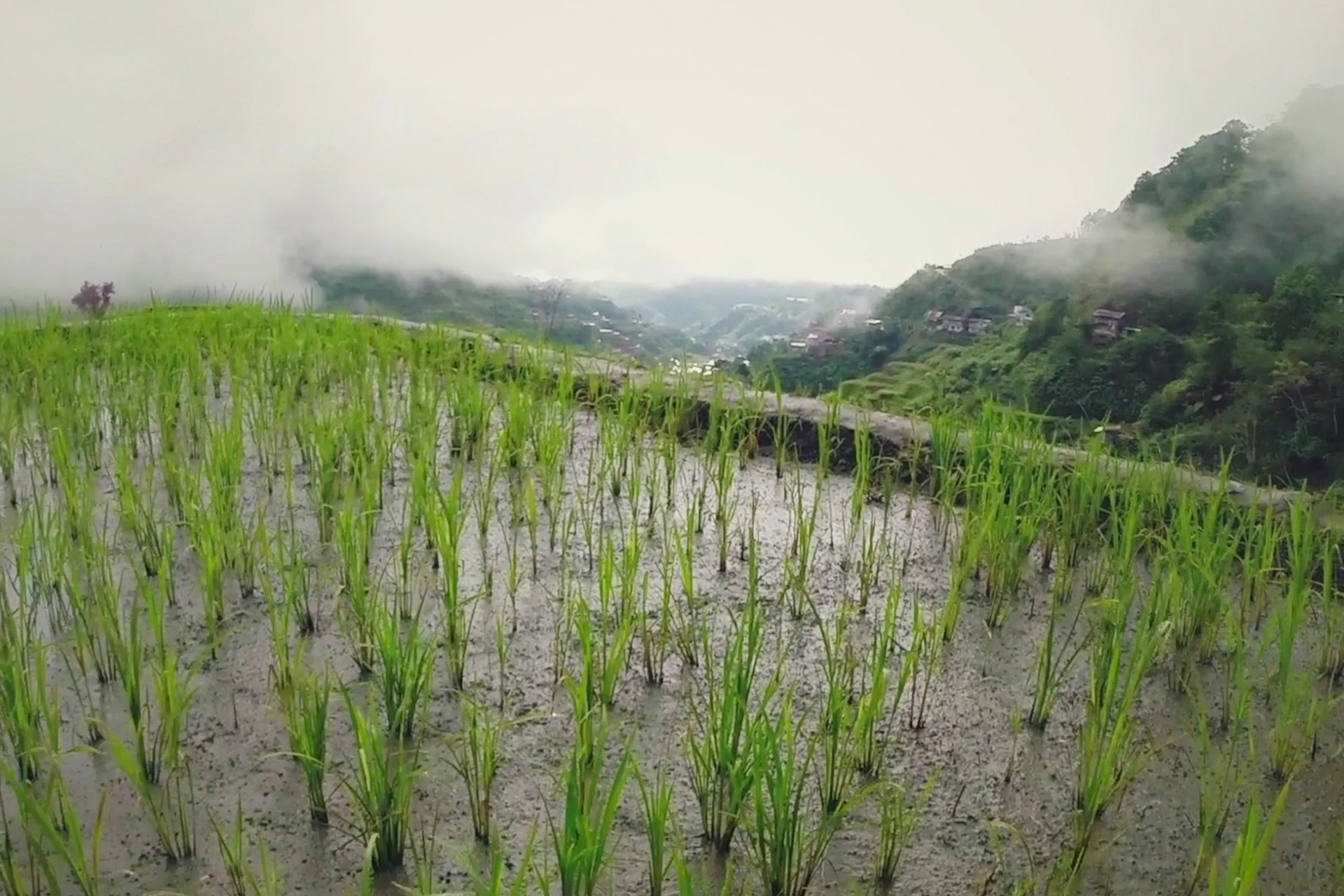 L 39 agriculture industrielle est dans l 39 impasse greenpeace for L agriculture