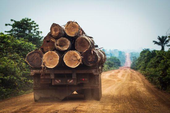 Lutte contre le bois illégal