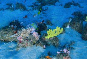 Récif de l'Amazone : découverte gênante pour Total