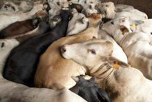 Scandale de la viande avariée : les Brésiliens ne sont pas les seuls concernés