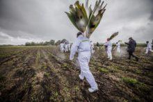 Nouveau OGM : nous maintenons notre démission du HCB