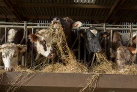 FarmErasmus : des Belges et des Bulgares en visite dans le Loir-et-Cher