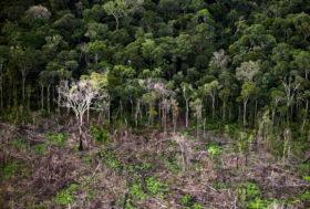 Quand le Brésil recule sur la protection de la forêt amazonienne