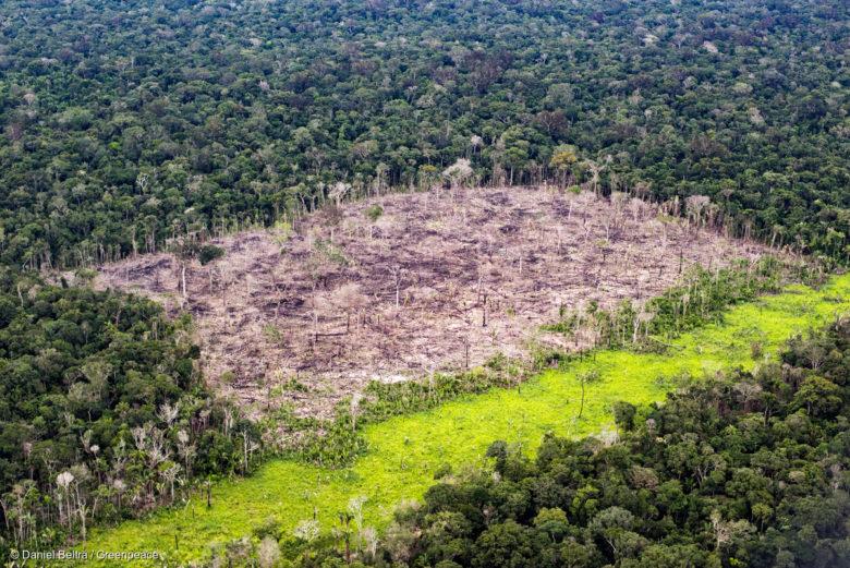 Bien connu Quand le Brésil recule sur la protection de la forêt amazonienne  SV76