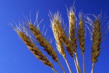 Tribunal Monsanto : s'affranchir de l'agroindustrie