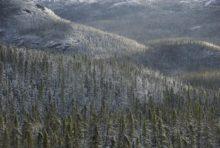 La forêt et le bâillon