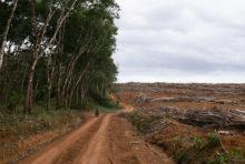 Greenpeace poursuivie en diffamation par la Socfin