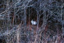 Défendre les forêts, une activité criminelle ?