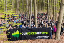 Forêts, liberté d'expression : des auteurs s'engagent avec Greenpeace