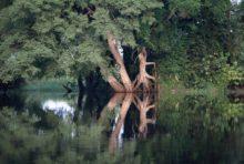 Exploitation forestière en Afrique : à quoi joue l'AFD ?