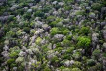 Récif de l'Amazone : Total et BP devraient revoir leur copie