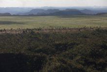 Déforestation au Brésil : mobilisation pour sauver le Cerrado