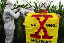 Bientôt un cadre réglementaire pour les nouveaux OGM ?