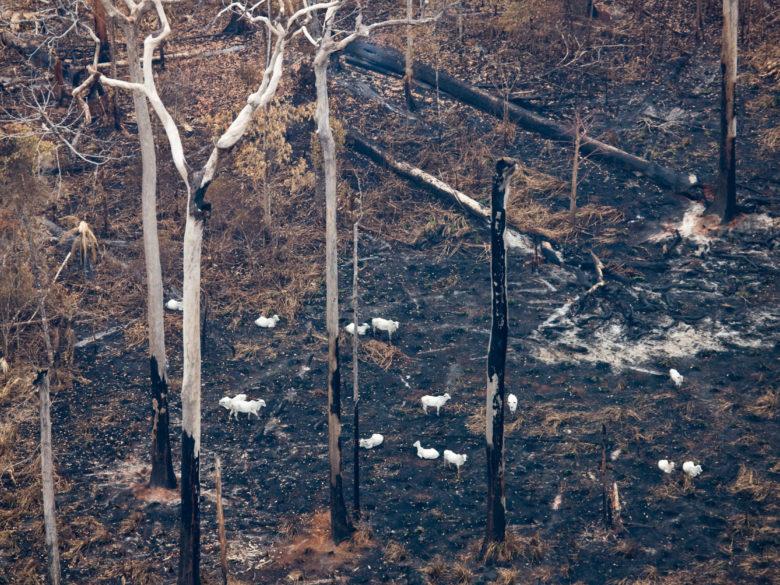 Une forêt récemment brûlée en Amazonie