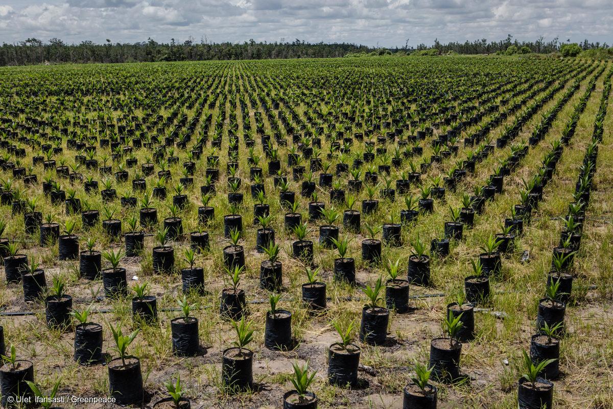 Très Lutte contre la déforêstation - Greenpeace France XU47