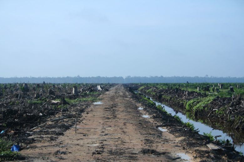 Riau_palm_oil_2007-780x520.jpg