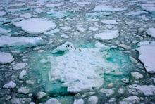 En 2018, Greenpeace mobilisée de l'Arctique à l'Antarctique