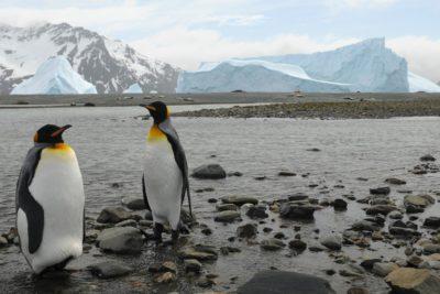 Protégeons l'océan Antarctique