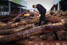 Bois illégal : la justice française doit agir