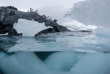 Océan Antarctique : journal de bord