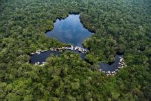 Déforestation en Afrique : le gouvernement de RDC hors-la-loi