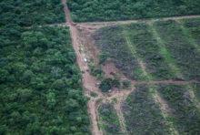 Forêts : bientôt une décision cruciale de l'Union Européenne ?