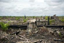 L'Union européenne va-t-elle continuer à ignorer son rôle dans la déforestation ?