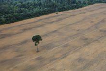 Déforestation importée : la France doit prendre ses responsabilités !