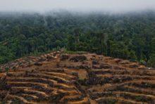 Huile de palme et déforestation : les grandes marques sont très en retard
