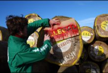 Bois illégal en Amazonie : la France impliquée