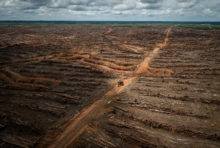 Agrocarburants : la France à contresens sur la protection des forêts