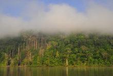 Méga mine d'or en Guyane : les forêts tropicales françaises en danger