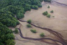 Récif de l'Amazone: Greenpeace mène l'enquête en Guyane