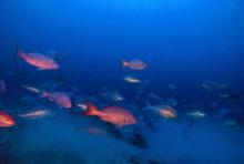 Récif de l'Amazone: unenouvelle étape décisive