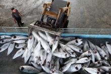 Taïwan : du travail forcé dans la pêche industrielle