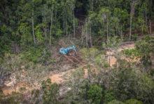 Huile de palme et déforestation : compte à rebours final