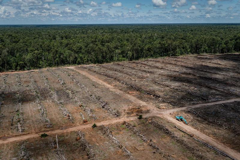 Plantation d'huile de palme en Papouasie indonésienne (PT Agrinusa Persada Mulia) - mars 2018 © Ulet Ifansasti / Greenpeace