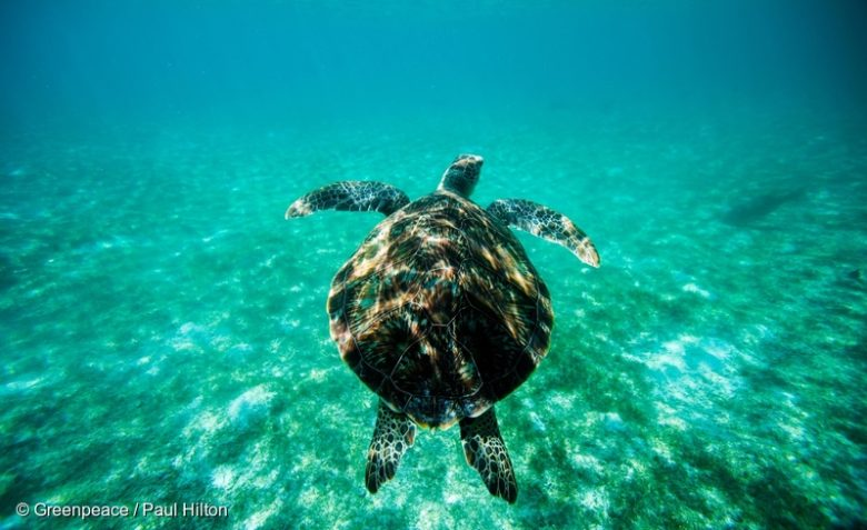 tortue_maldives-780x477.jpg