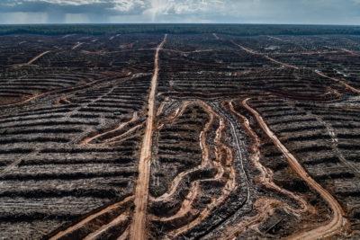 Déforestation et huile de palme : le compte à rebours final