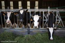 Face à la crise, une nécessaire refonte des Chambres d'agriculture