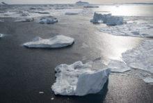 Les réserves marines, assurance santé des océans