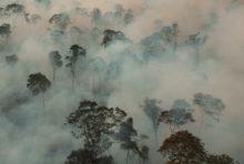 Elevage industriel : la déforestation dans l'assiette