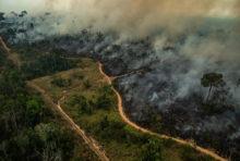 Amazonie : nos poumons brûlent