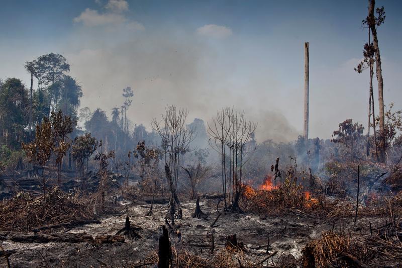 """""""Biocarburants"""" : le (trop) plein de déforestation"""
