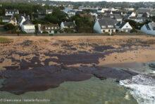 Erika : il y a 20 ans, Total souillait les côtes bretonnes