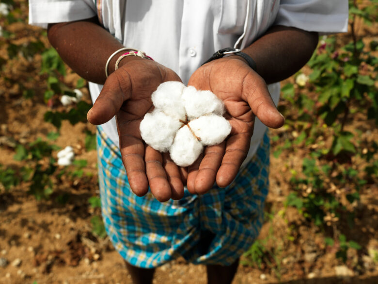 Organic Cotton in Hands of Farmer. © Peter Caton