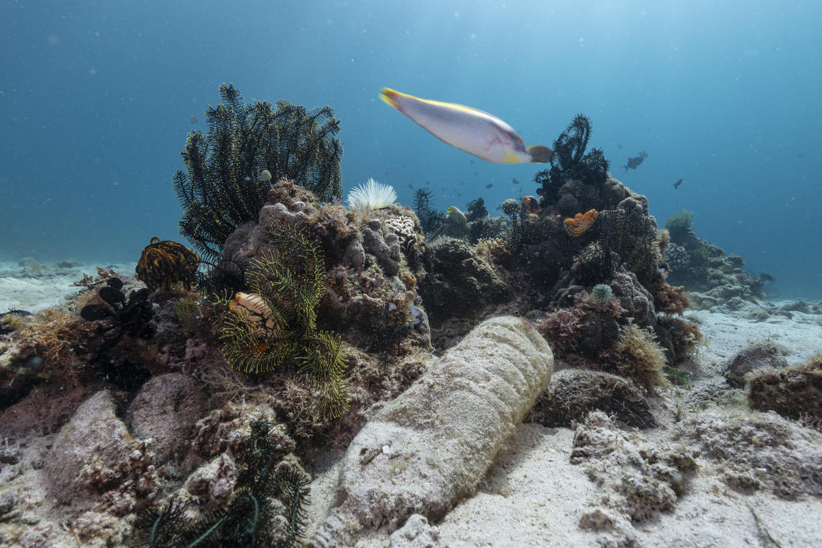 Corals and Plastic Waste in Verde Island, Philippines.