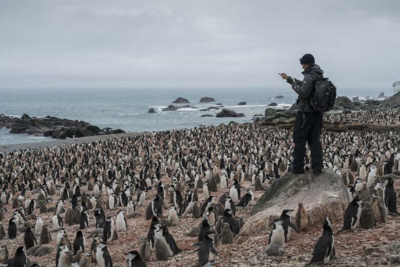 Chinstrap Penguin Survey on Elephant Island in Antarctica. © Christian Åslund