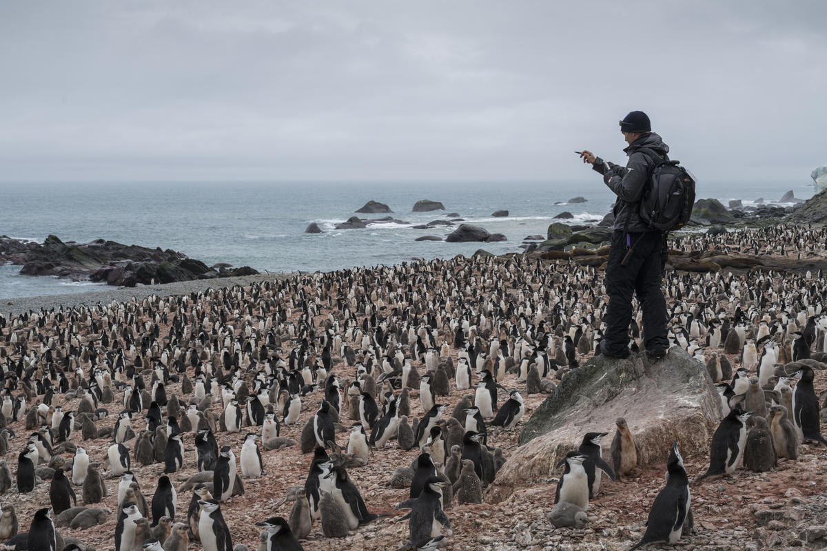 Chinstrap Penguin Survey on Elephant Island in Antarctica. © Christian Åslund