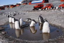 En Antarctique, les manchots ont chaud. Aidons-les !